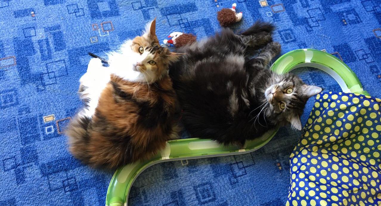 Katzen mit Spielschiene